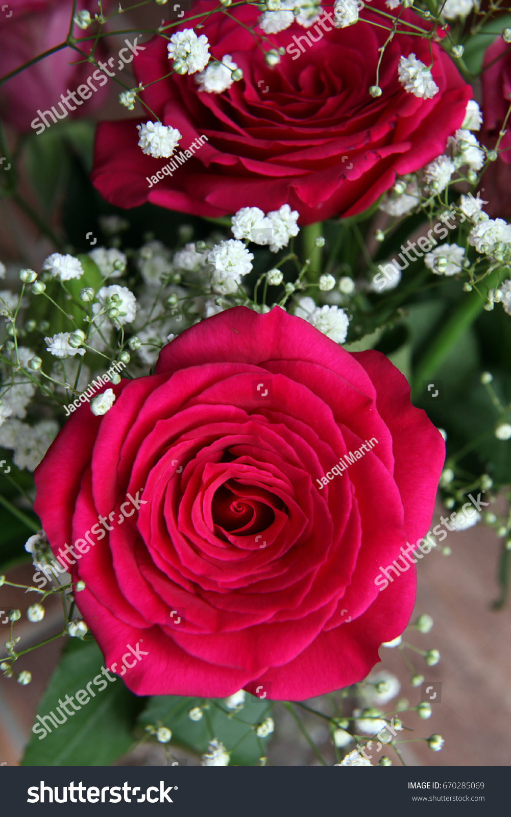 Beautiful Red Rose Green Leaves Small Stock Photo Edit Now