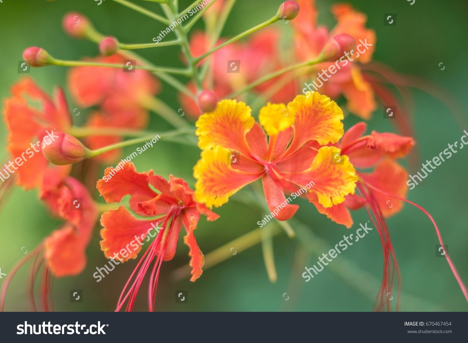 Orange beautiful flowers blooming in the garden ez canvas id 670467454 izmirmasajfo