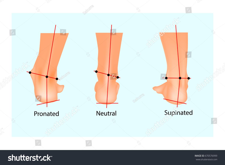 Vector Illustration Normal Human Foot Foot Stock Vector 670576999 ...