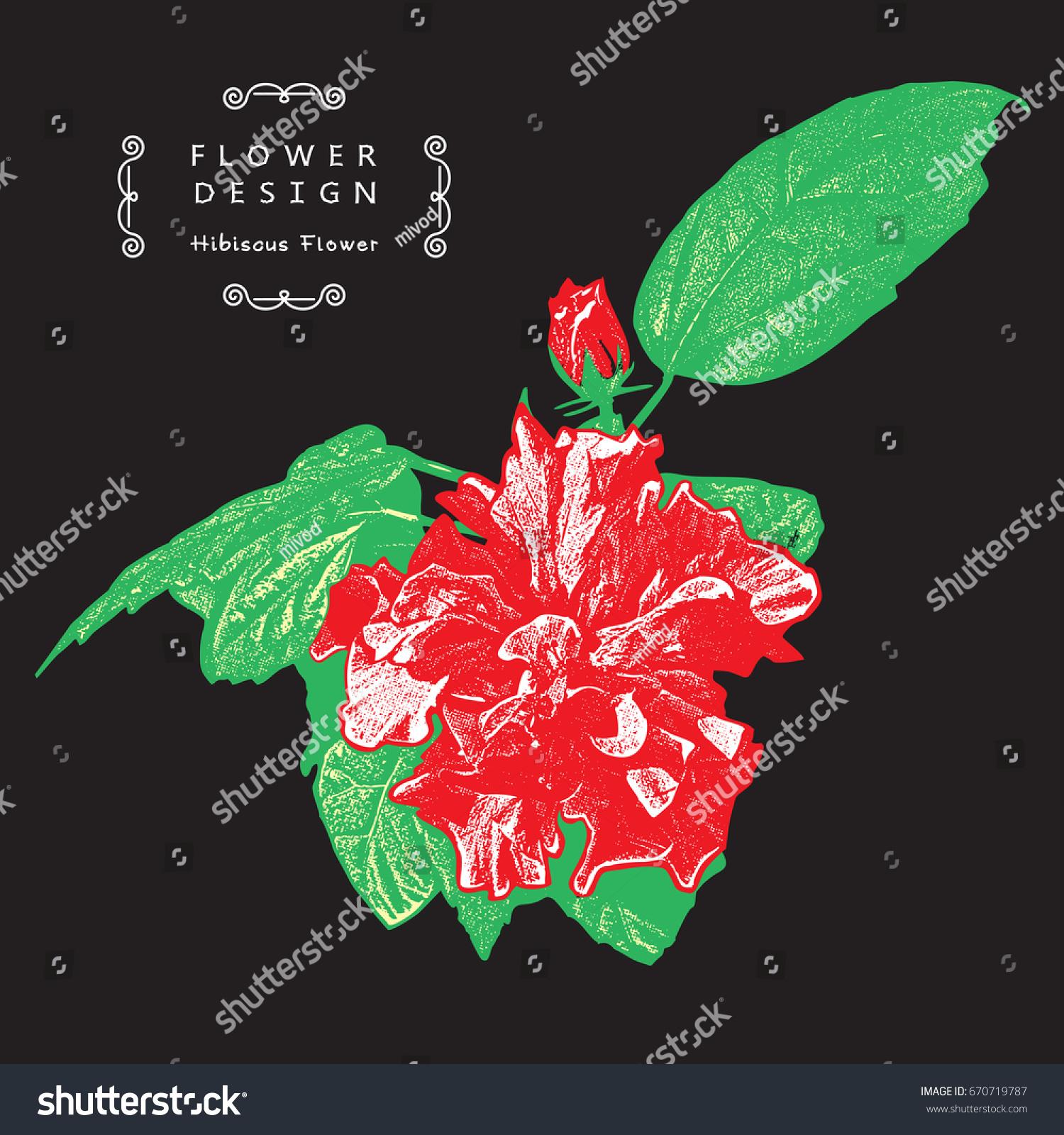 Beautiful flower china rose rosasinensis hawaiian stock vector beautiful flower china rose rosa sinensis hawaiian hibiscus vector illustration of izmirmasajfo
