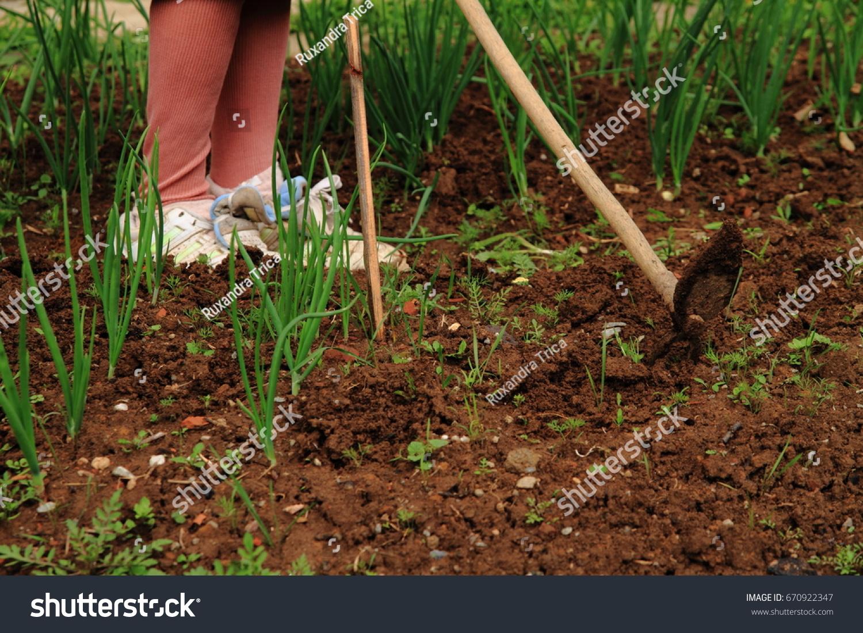 Woman Works Garden Detail Legs Hoe Stock Photo (Edit Now) 670922347 ...