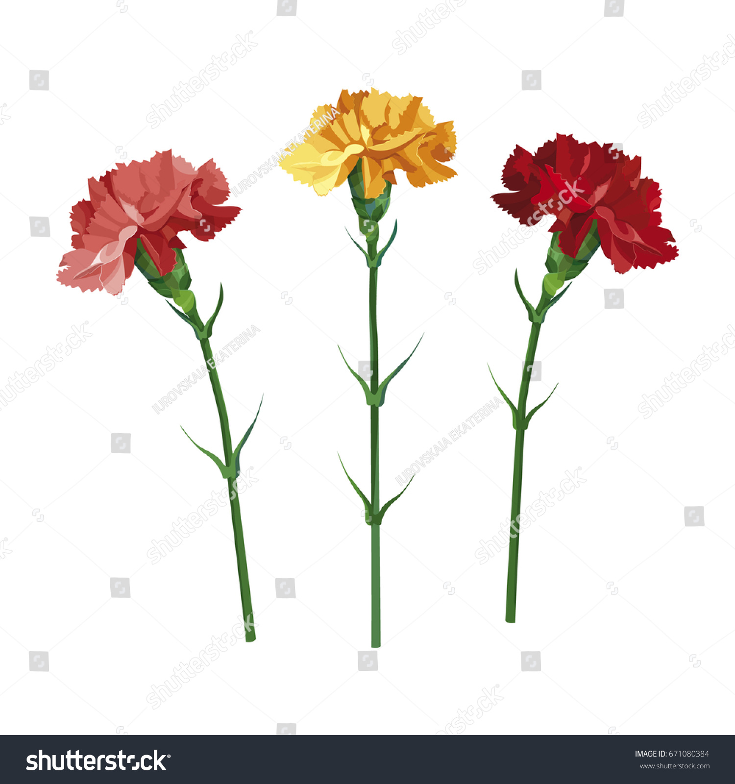 Set Carnation Flowers Yellow Pink Red Stock Vector Royalty Free