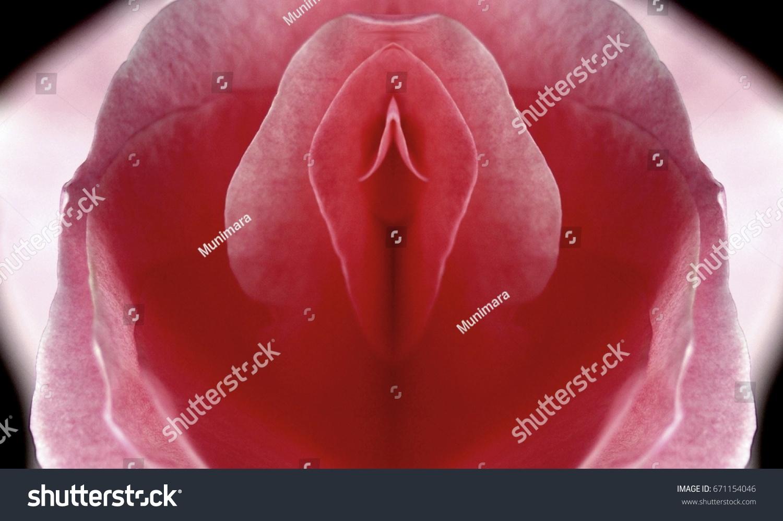 Vagina Orgasm Pictures