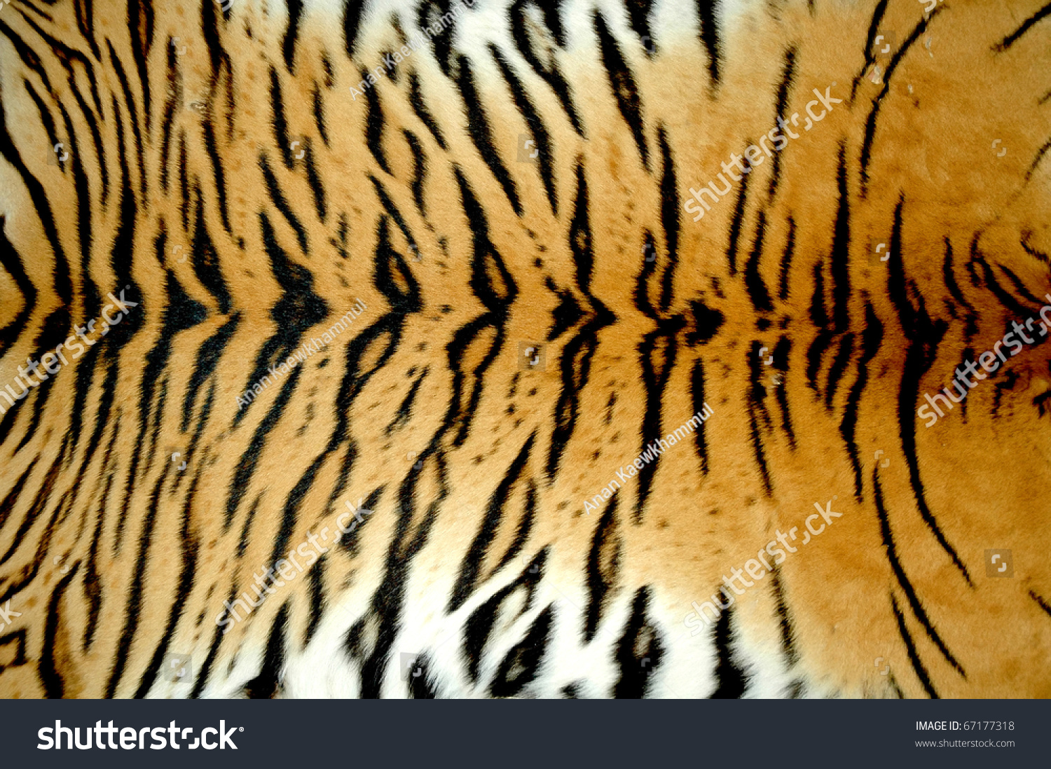 Texture Of Real Tiger Skin ( Fur ) Stock Photo 67177318 ... - photo#5