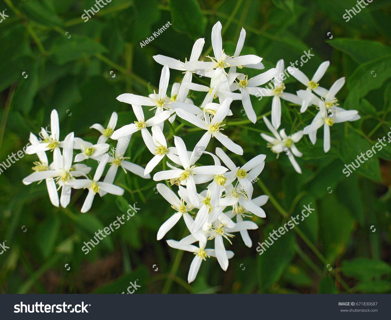 Crossshaped White Flowers On Background Dark Stock Photo Edit Now