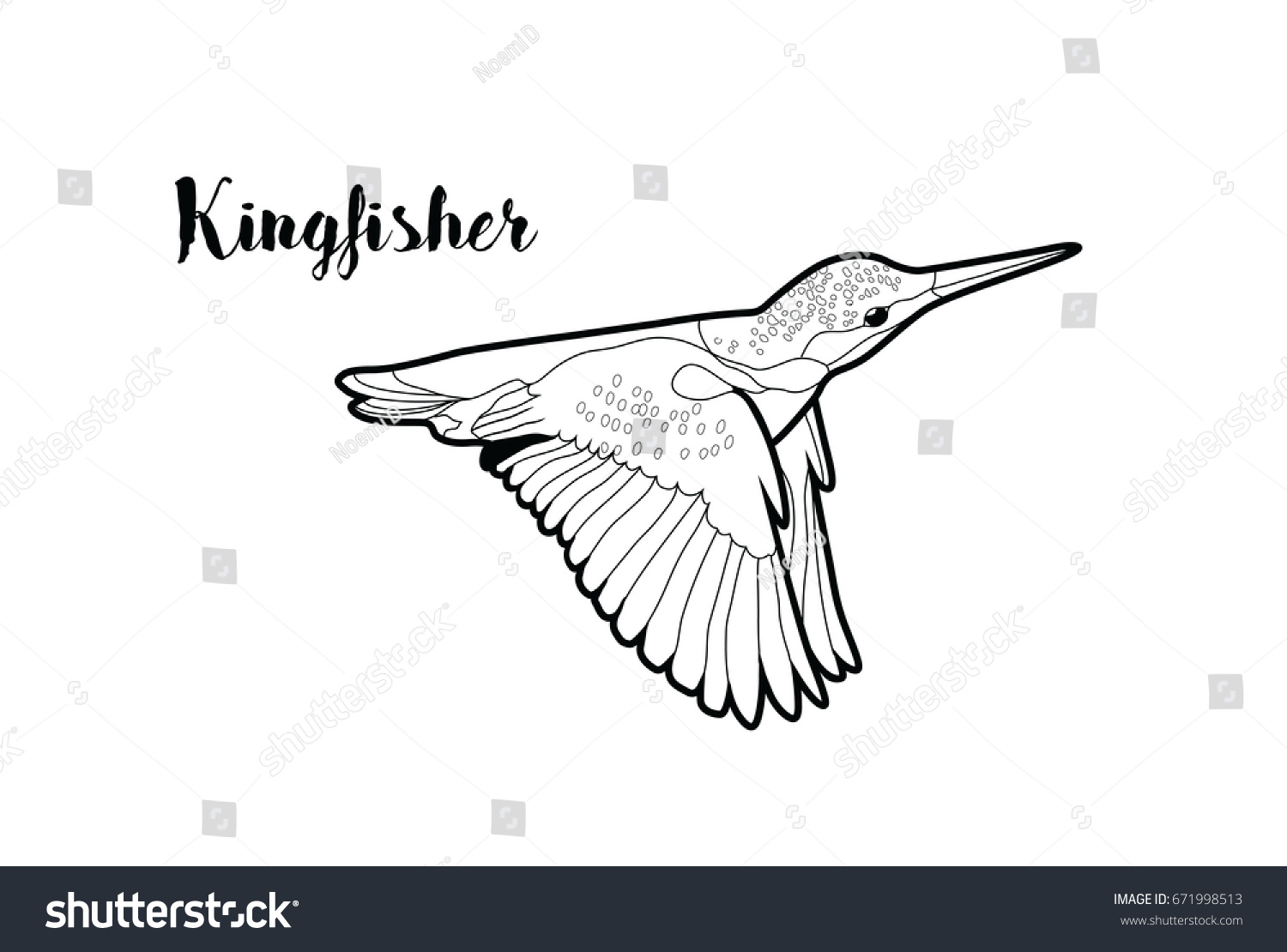 Vector Isolated Kingfisher Bird Flying Graphic For Coloring Page