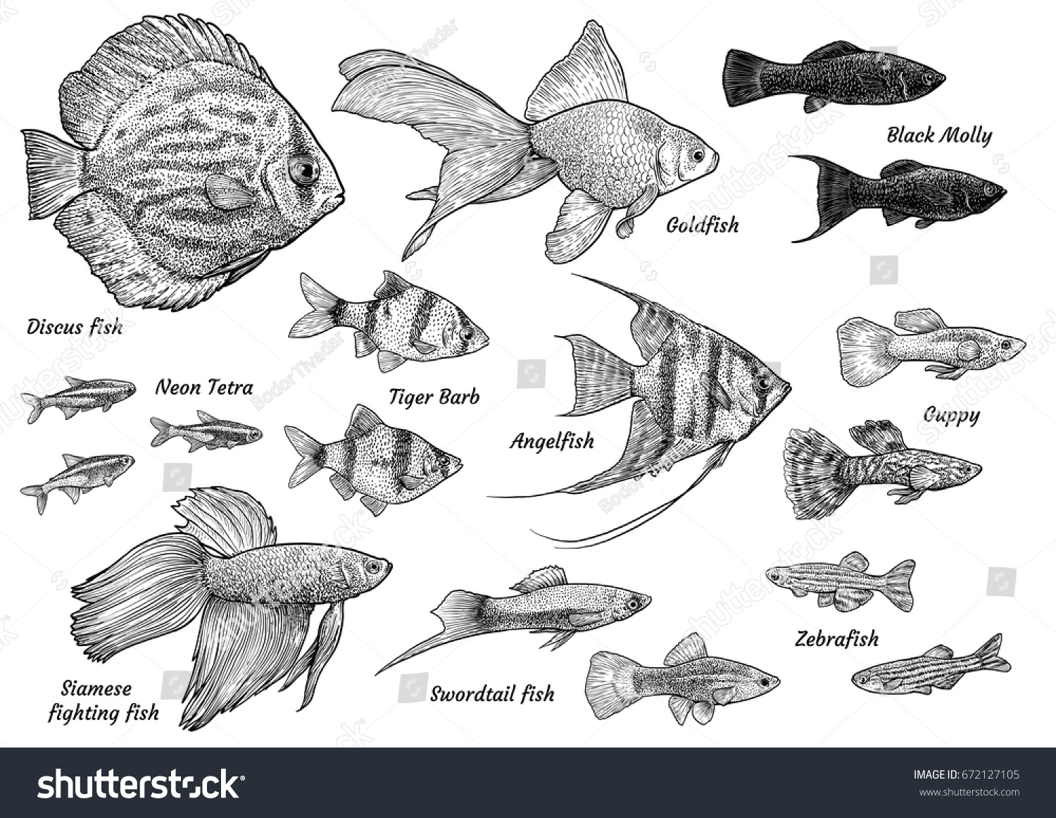 Collection Aquarium Fish Illustration Drawing Engraving Stock Vector