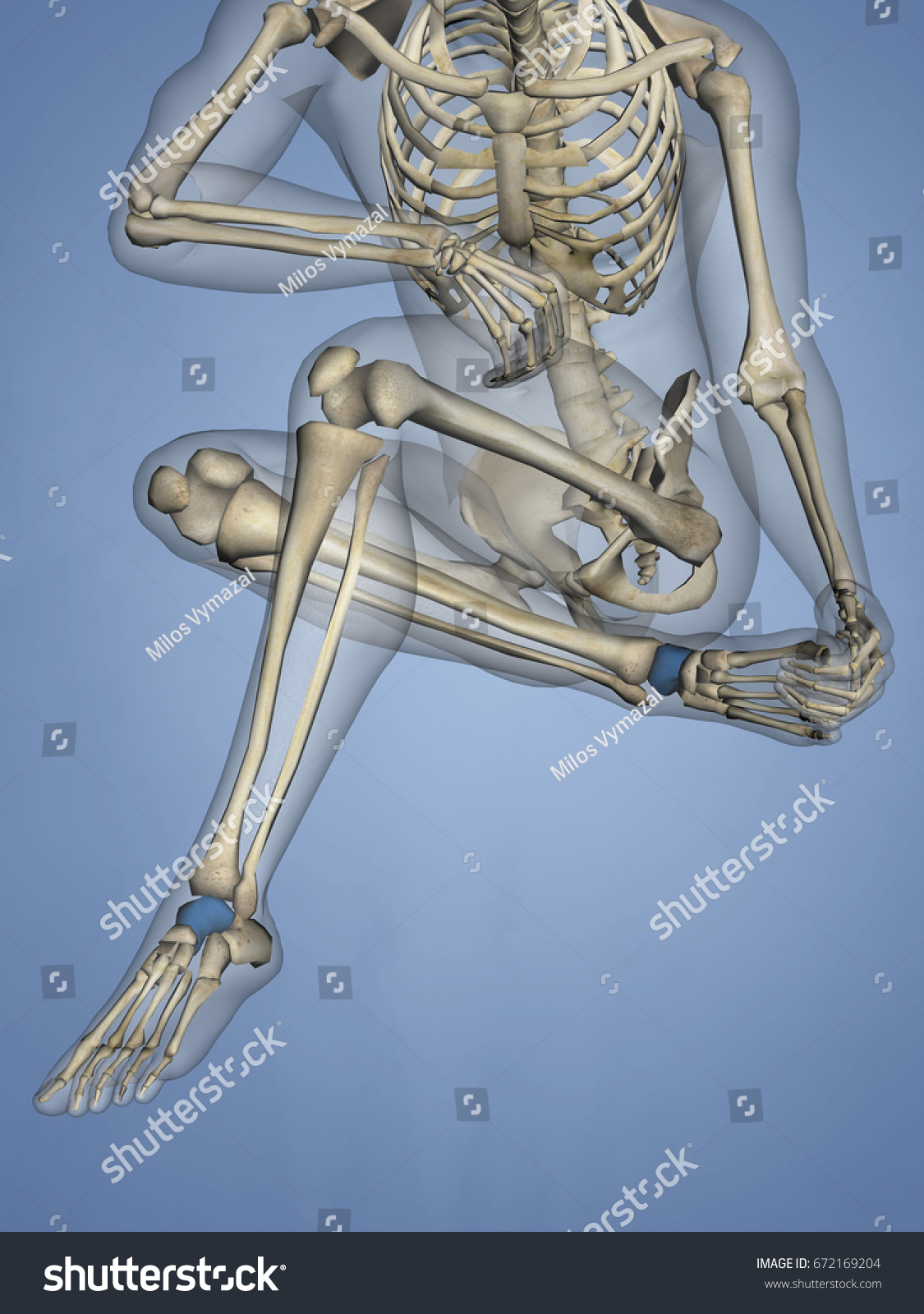 Talus Bone 3 D Model Stock Illustration 672169204 - Shutterstock