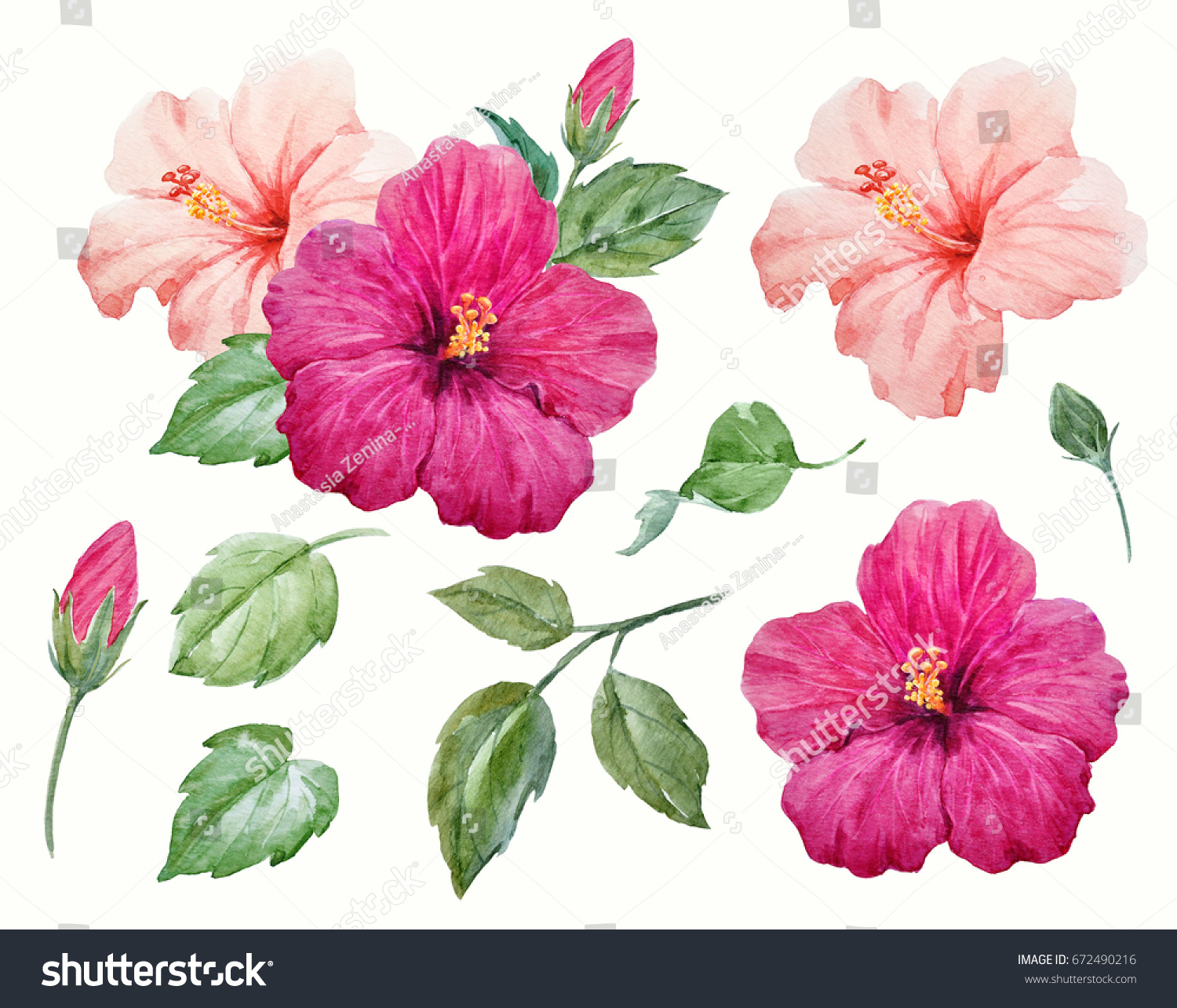 Watercolor Tropical Flower Purple Delicate Pink Stock Illustration