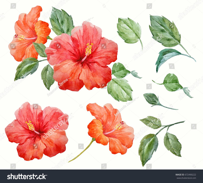 Watercolor Tropical Flower Red Orange Hibiscus Stock Illustration
