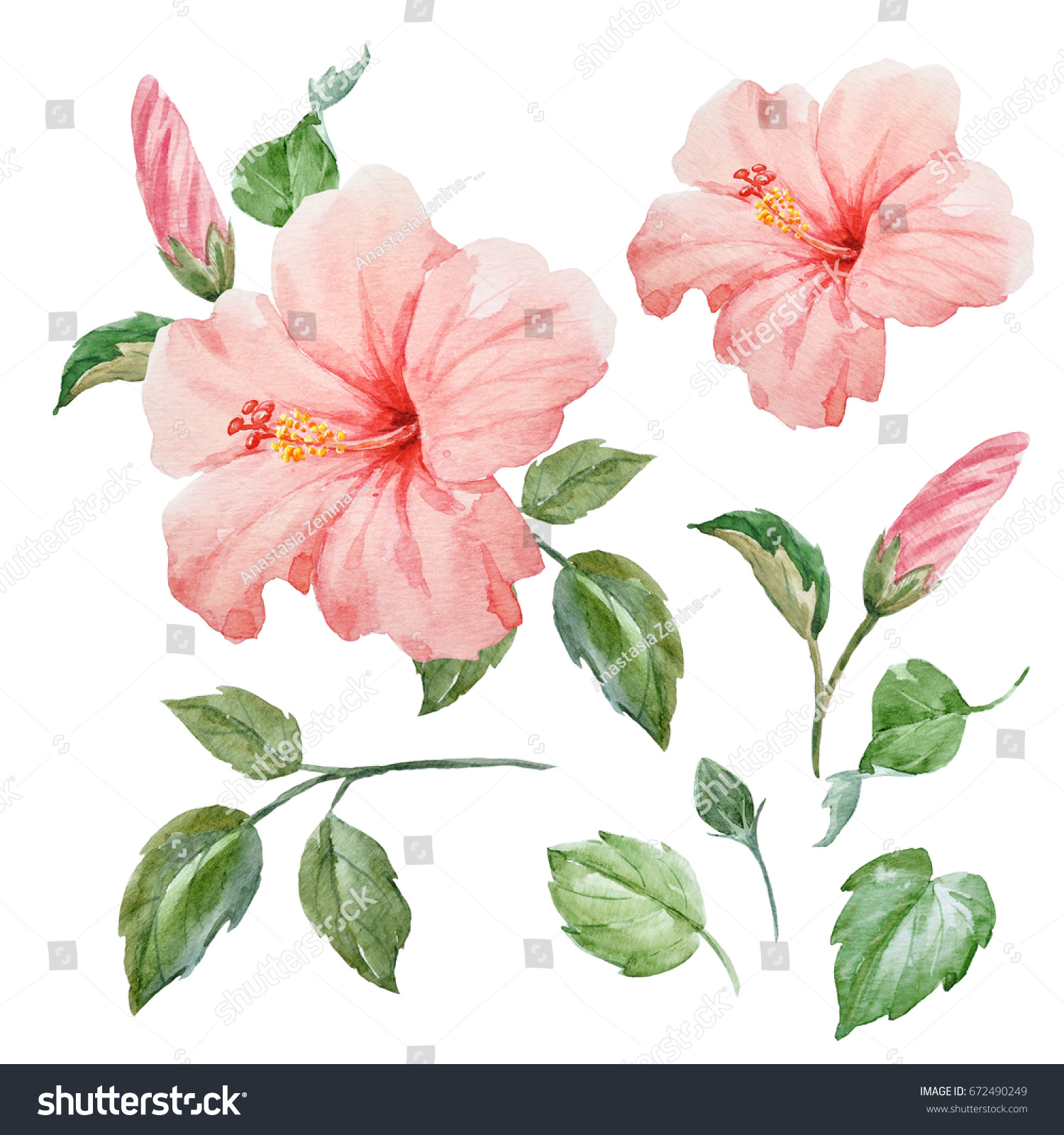 Watercolor Tropical Flower Pink Hibiscus Leaves Stock Illustration
