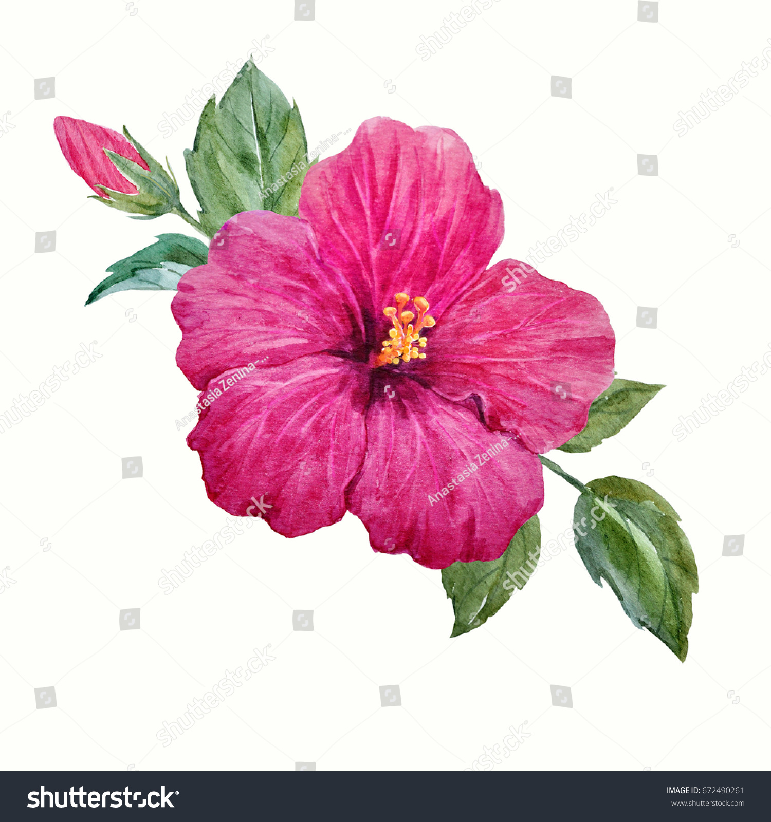 Watercolor Tropical Flower Purple Hibiscus With Leaves And Bud Hawaiian Composition