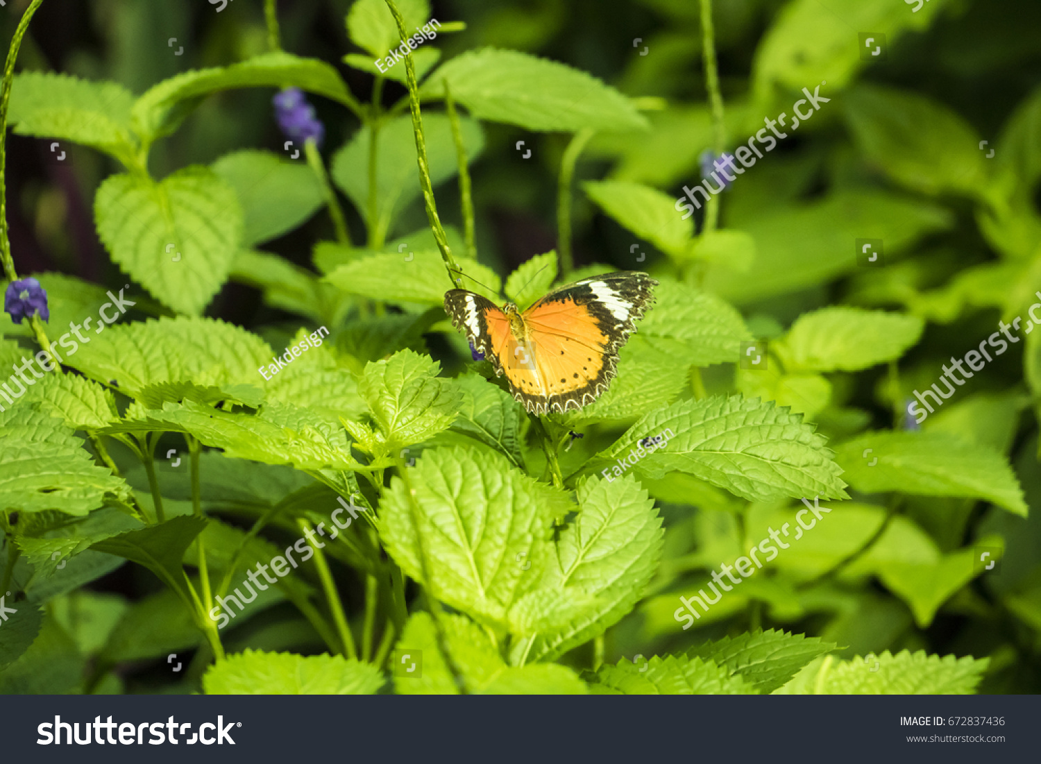 Beautiful Butterfly On Colorful Flower On Stock Photo - Colorful flower garden background