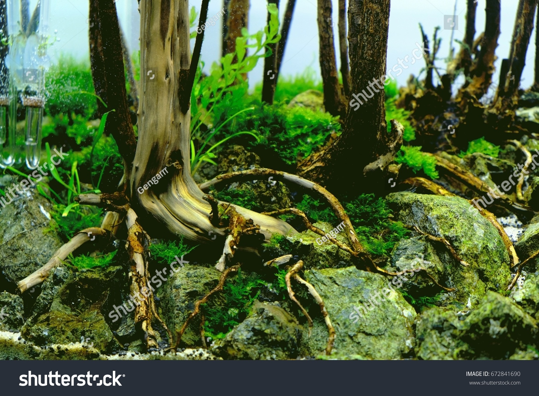 Aquascape Forest Stock Photo Edit Now 672841690