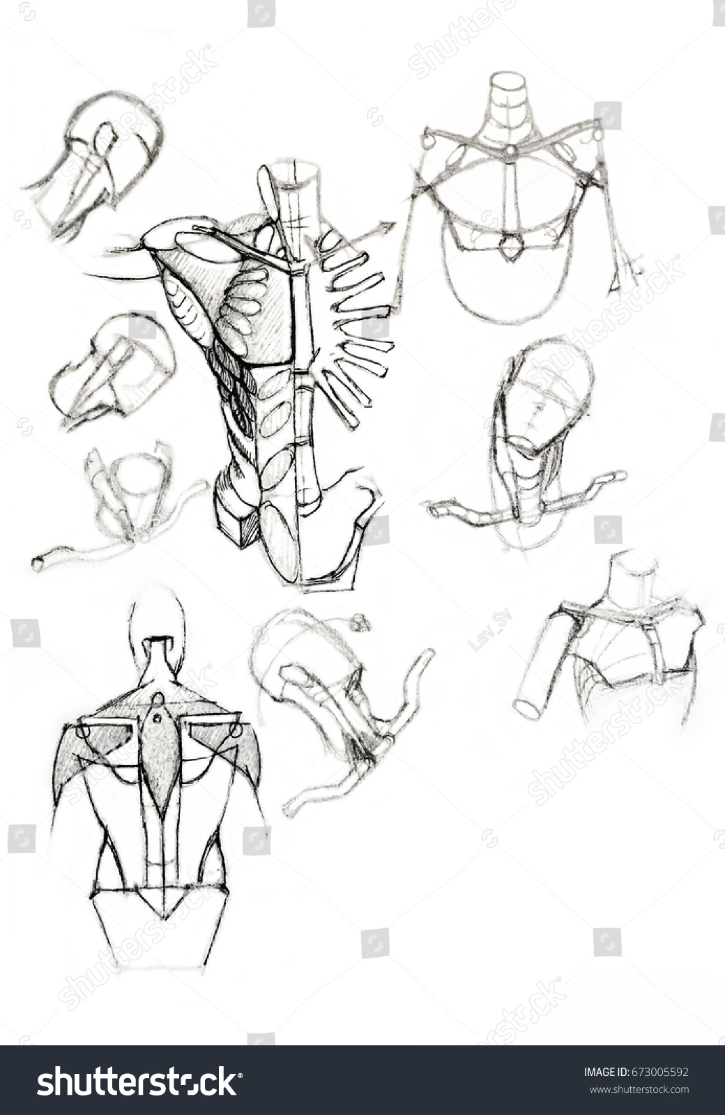 Sketch Human Anatomy Drawing Soft Pencil Stock Illustration