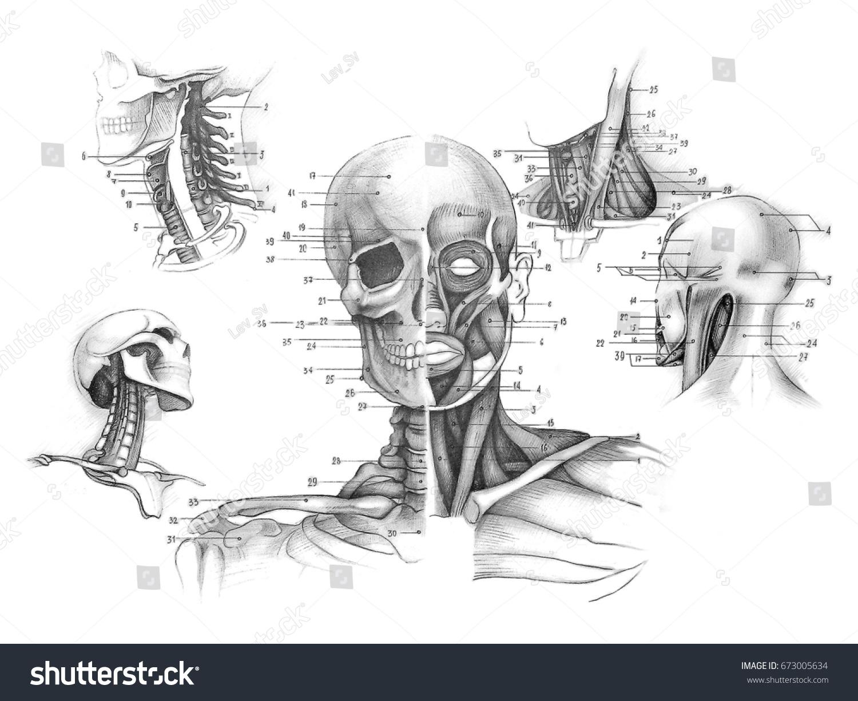 Sketch Human Anatomy Drawing Soft Pencil Stock Illustration ...