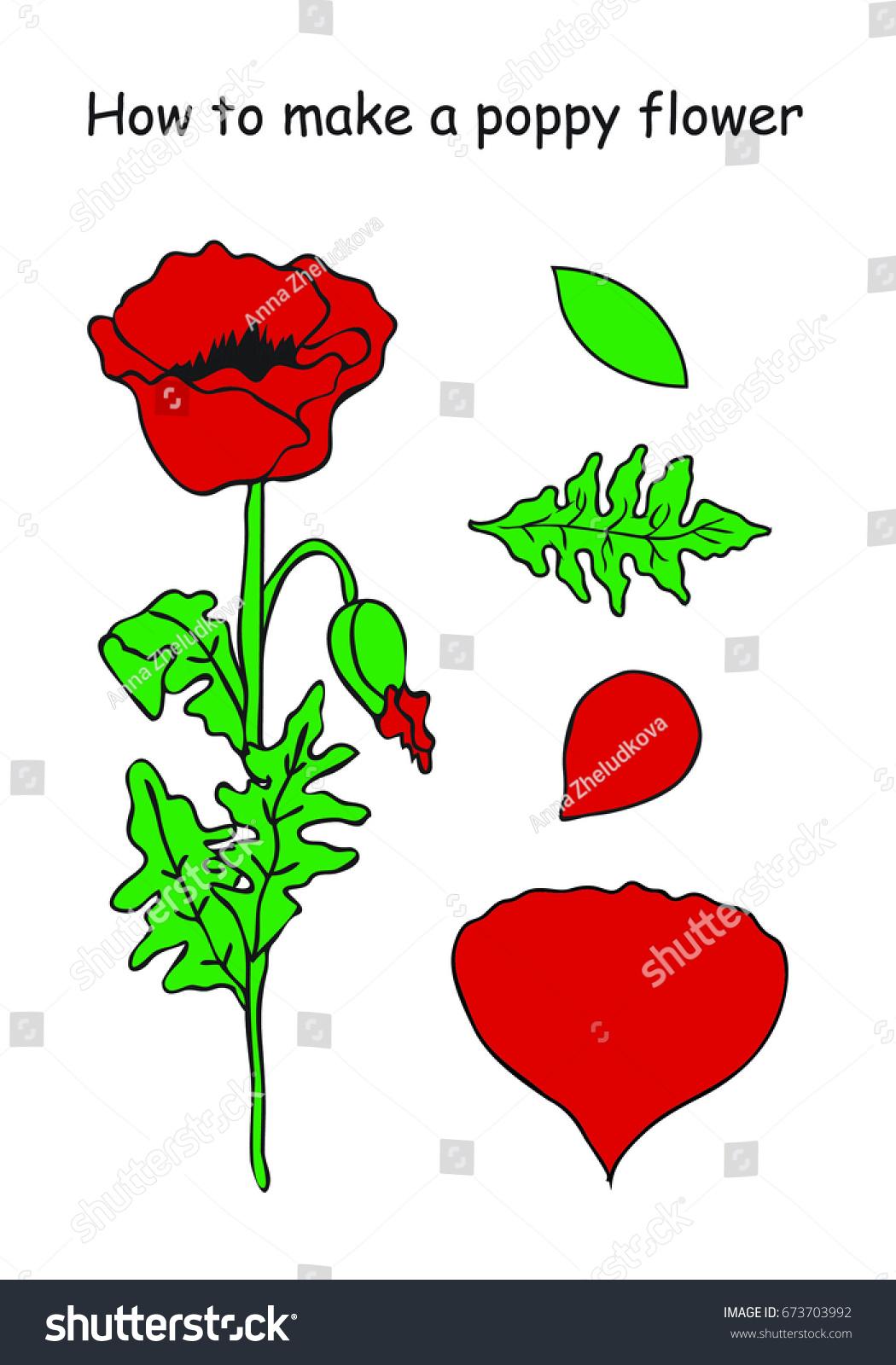 How Make Poppy Flower Outline Scheme Stock Vector 673703992