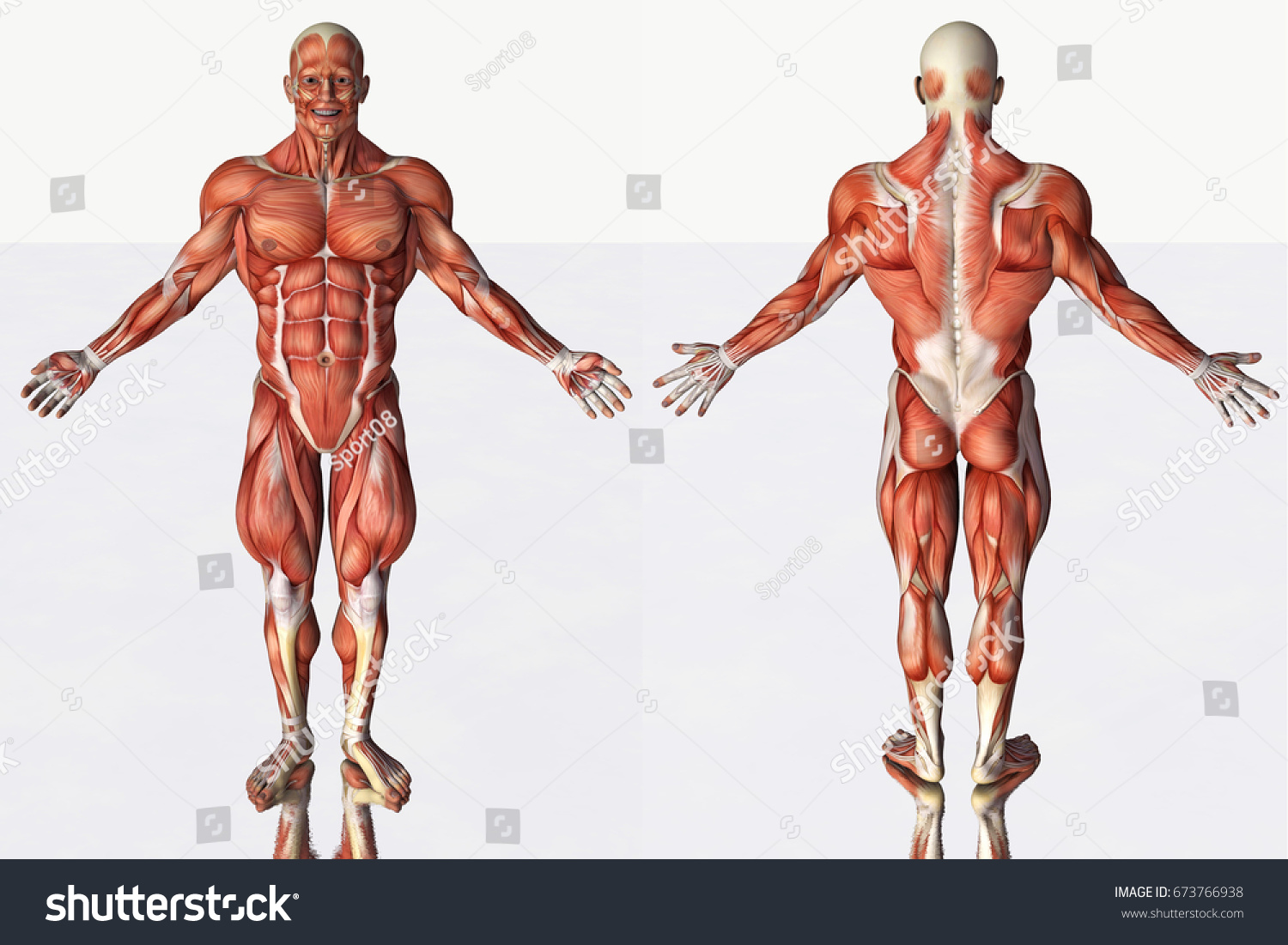 3 D Rendering Illustration Muscular Anatomical Strong Stock