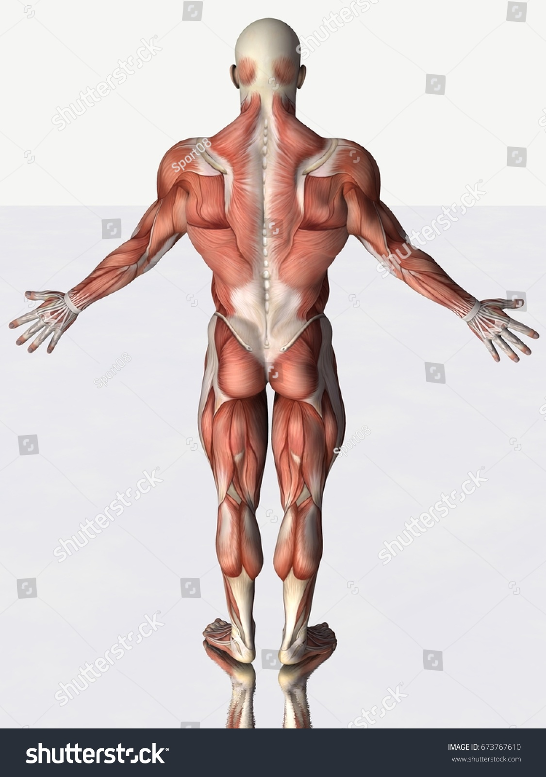 Back View 3 D Rendering Strong Anatomical Stock Illustration ...