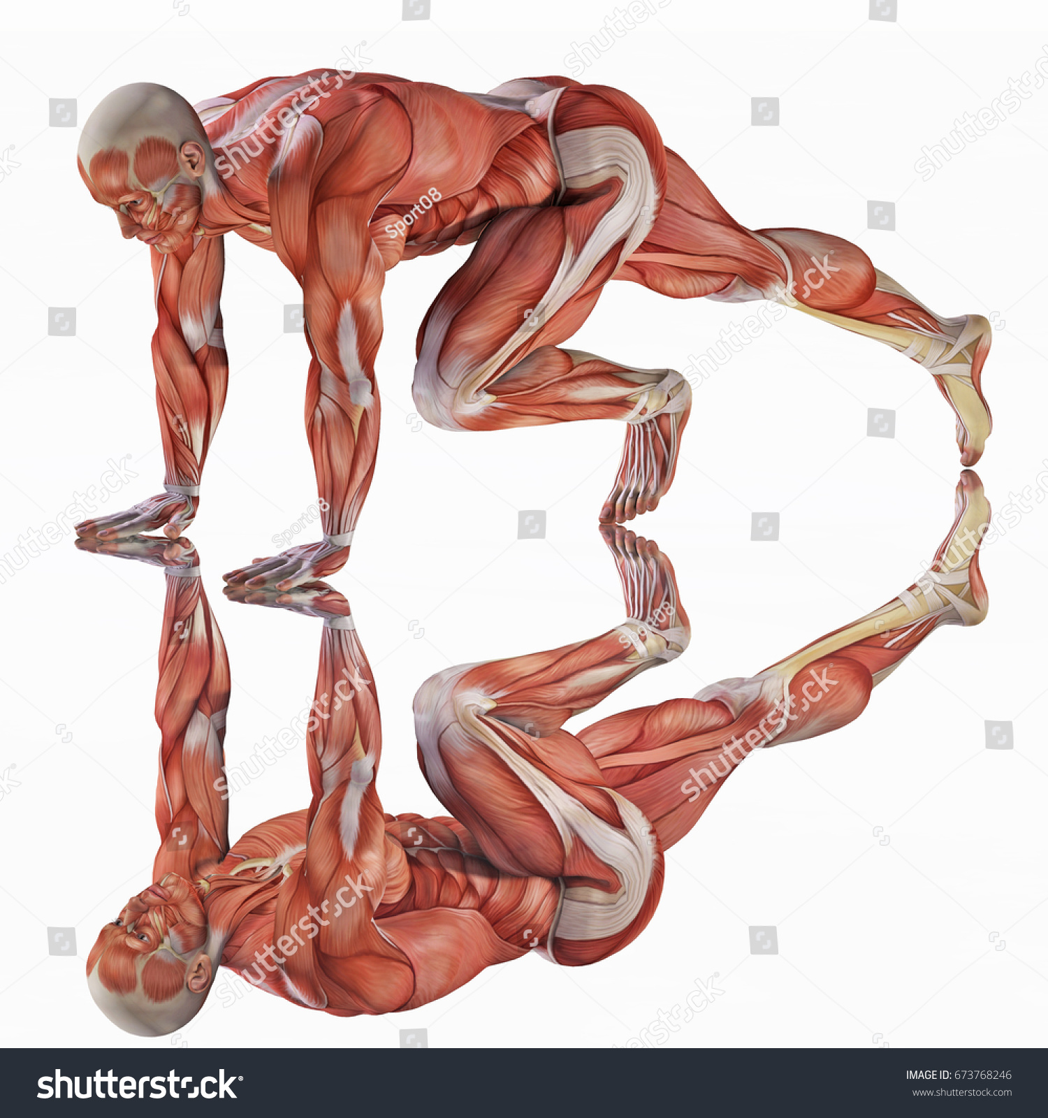 3 D Rendering Strong Anatomical Muscles Man Stock Illustration ...