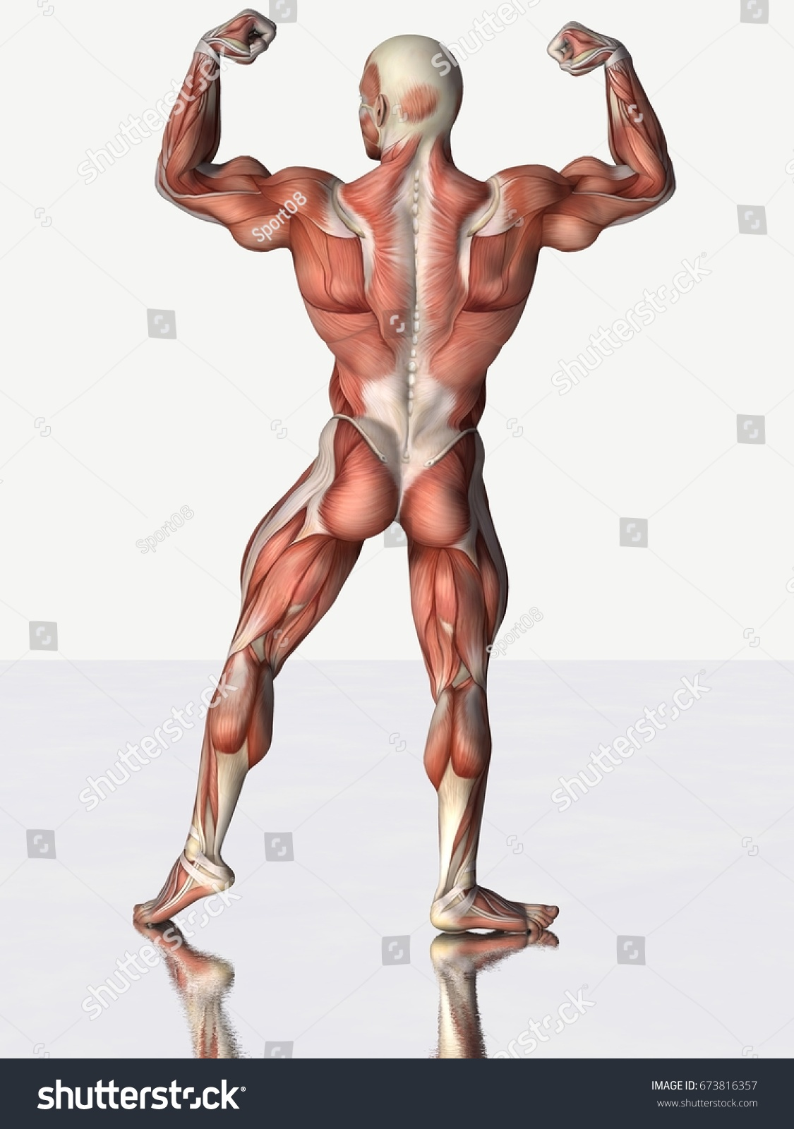3 D Rendering Strong Muscles Anatomical Man Stock Illustration ...