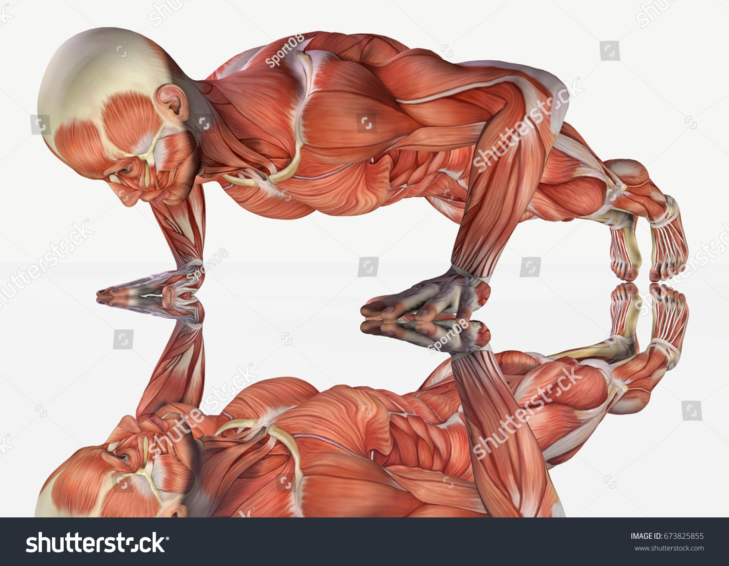 3 D Rendering Strong Muscle Anatomical Man Stock Illustration ...