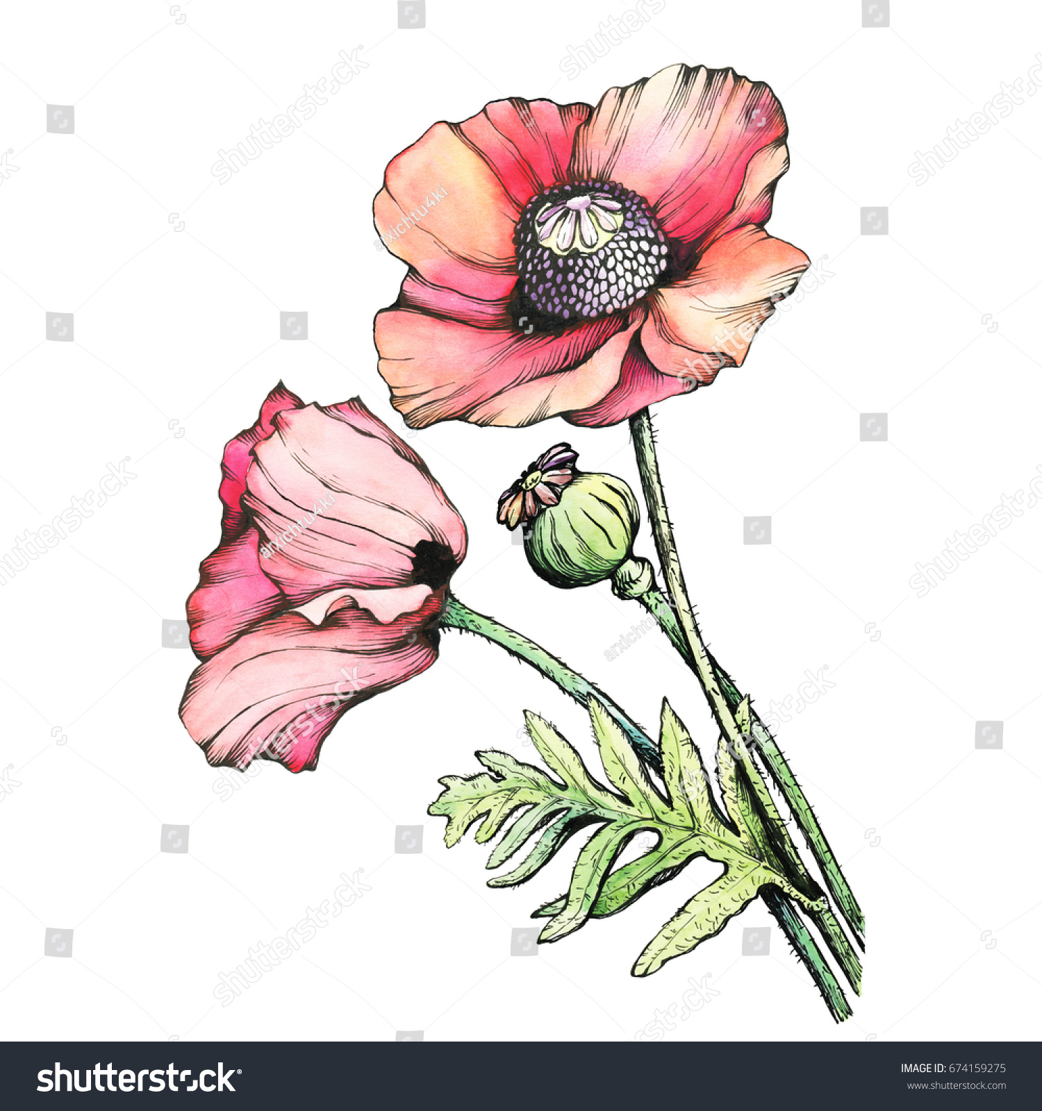 Graphic Branch Red Poppies Flowers Bud Stock Illustration 674159275