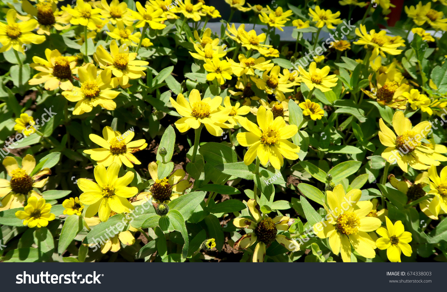 Background beautiful yellow flowers stock photo edit now 674338003 background with beautiful yellow flowers izmirmasajfo