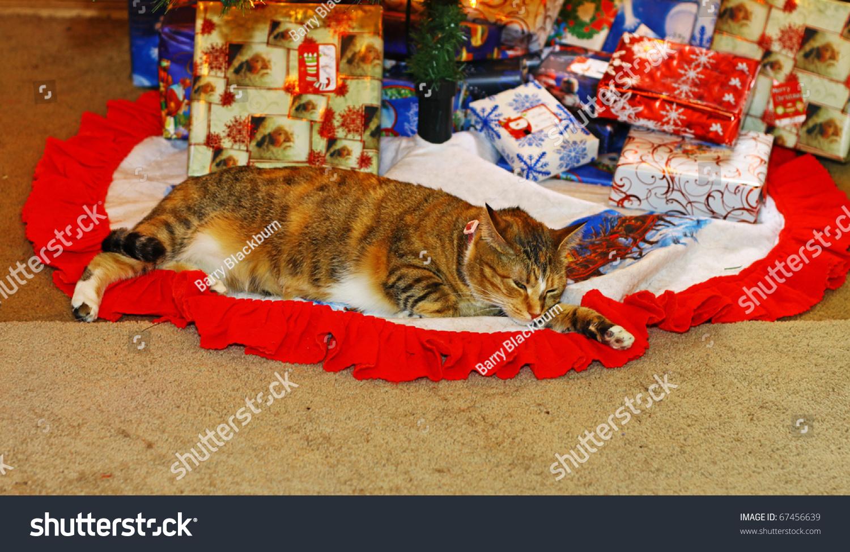 Cute Kitty Cat Under Christmas Tree Stock Photo 67456639