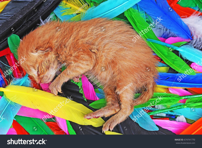 New Born Baby Cat Sleeping Cute Animals Wildlife Stock Image 674741770