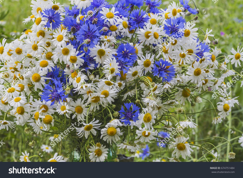 Beautiful Summer Flowers Of Cornflower And Chamomile Ez Canvas