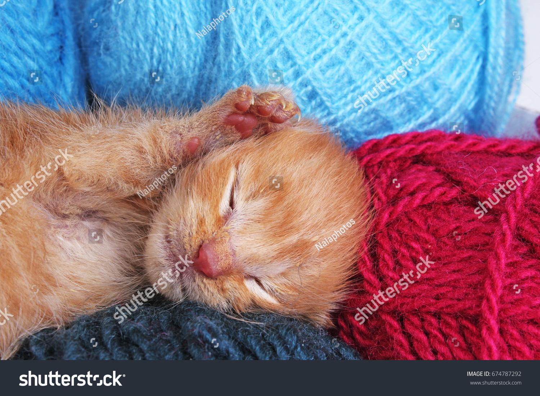 New Born Baby Cat Sleeping Cute Stock Photo Edit Now 674787292
