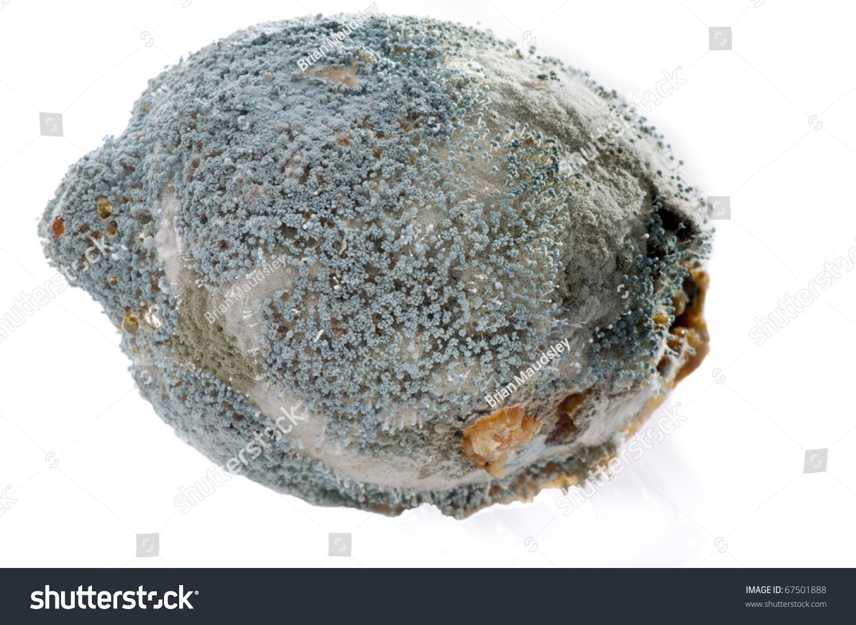 Macro Rotten Lemon Penicillium Species Mould Stock Photo ...