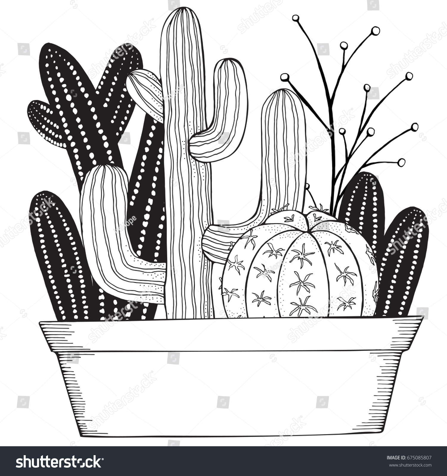 hand drawn set succulents cacti pots stock vector 675085807
