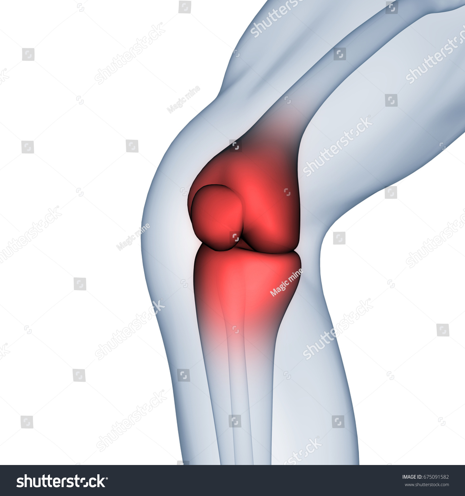 Human Body Bone Joint Pains Knee Stock Illustration 675091582
