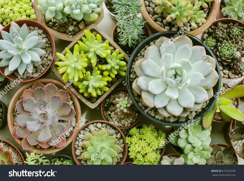 Mix Succulent Flowering House Plants Pots Stock Photo Edit Now