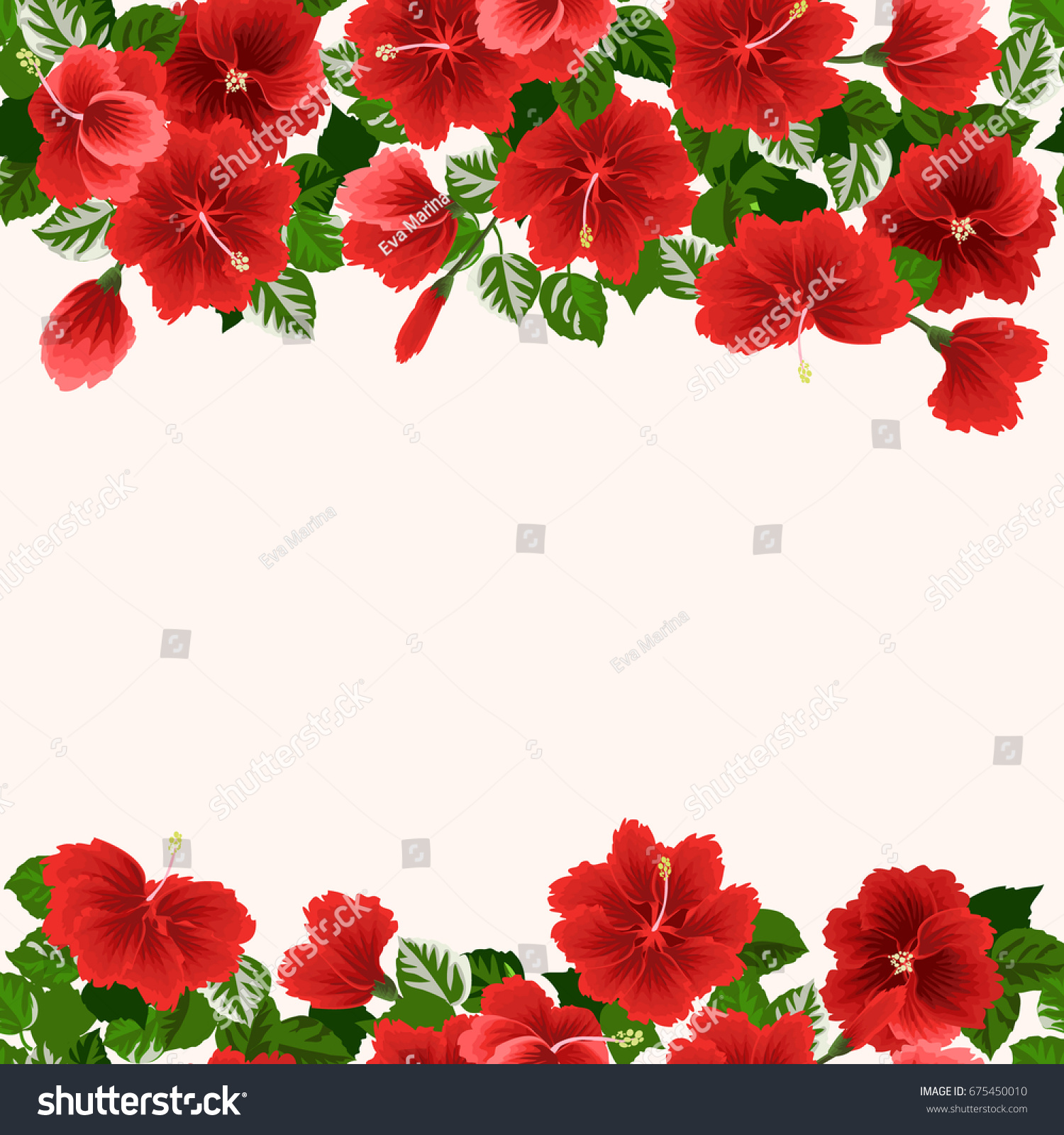 Floral Invitation Tropical Flowers Hibiscus Greeting Stock ...