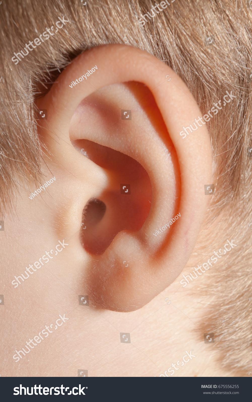 Human Ear Body Parts Anatomy Closeup Stock Photo (Royalty Free ...
