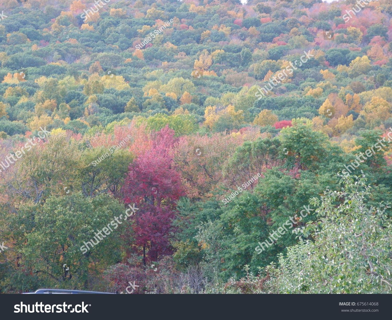 Fall Foliage Stock Photo (Edit Now) 675614068
