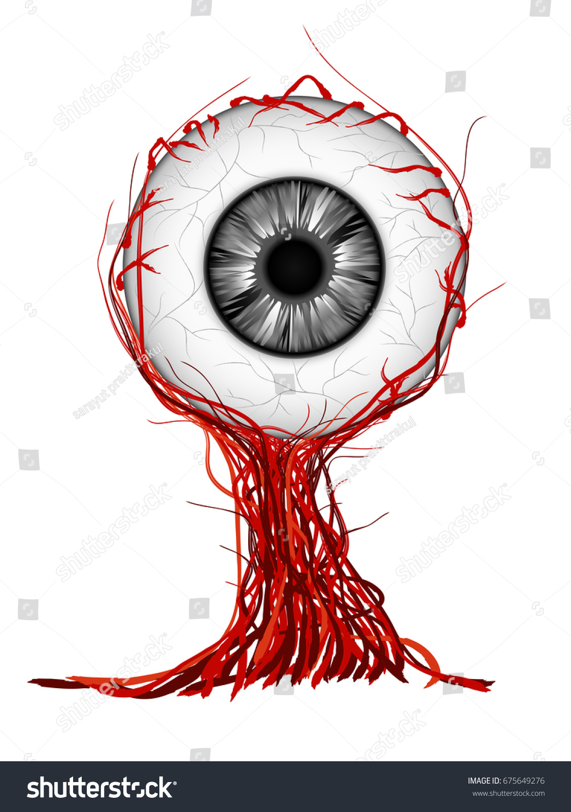 Drawing Eye Anatomy Inner Structure Visual Stock Photo (Photo ...
