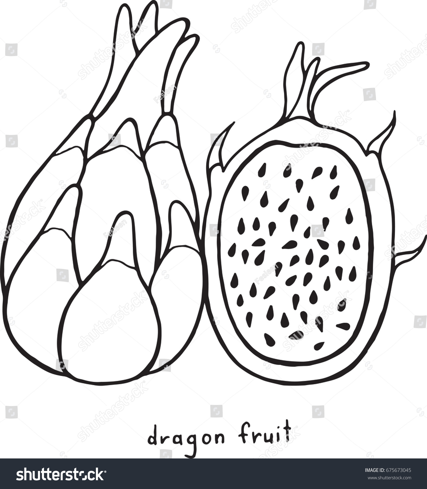 Dragon fruit coloring page graphic raster black and white art for coloring books for adults tropical and exotic fruit line illustration illustration