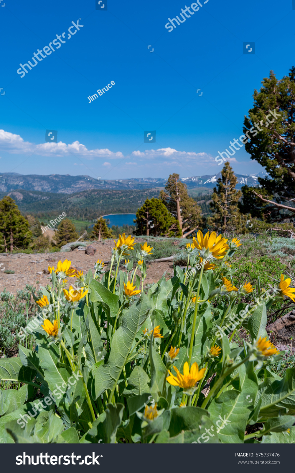 Yellow Mountain Flowers Stock Photo Edit Now 675737476 Shutterstock