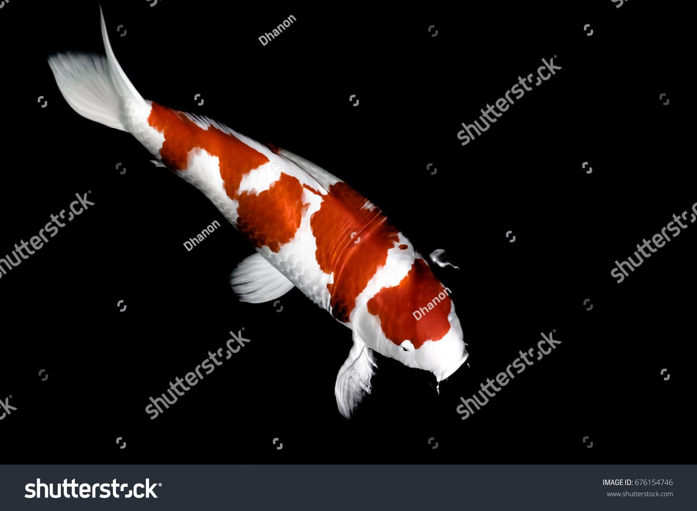 Koi Fish Under Wave Wallpaper Stock Photo (Royalty Free) 676154746 ...