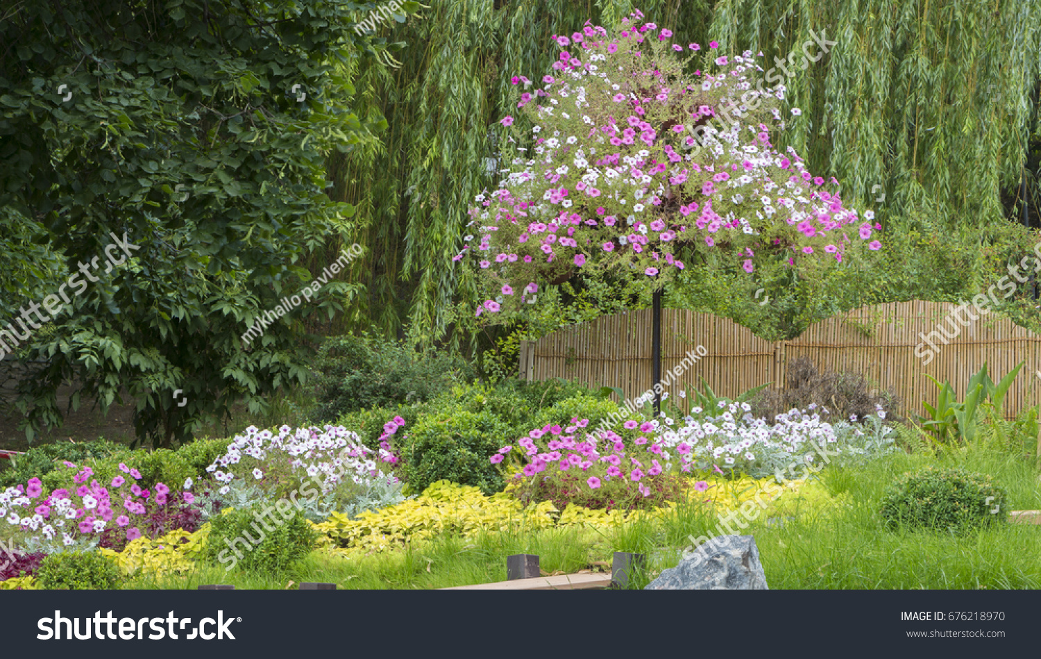 Figures Multicolored Annual Flowers Garden Close Stock Photo Edit