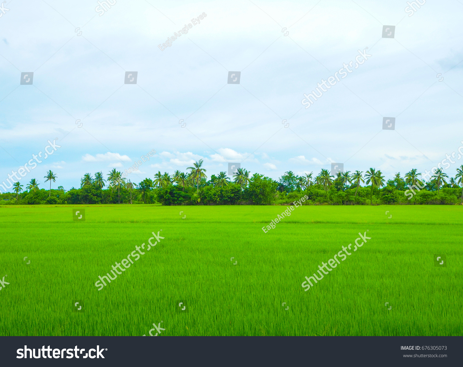 rice field nature background green field stock photo (download now