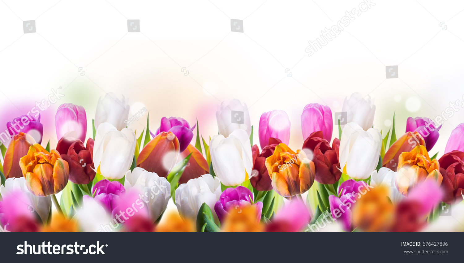 Multi Colored Tulips With Willow And Butterflies Easter Flowers
