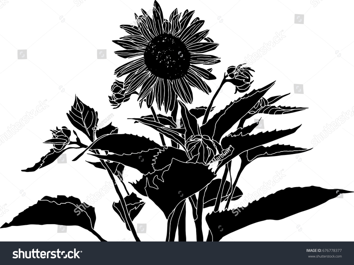 Elegant Black White Sunflower Vector Drawing Stock Vector ... for Clipart Sunflower Black And White  557yll
