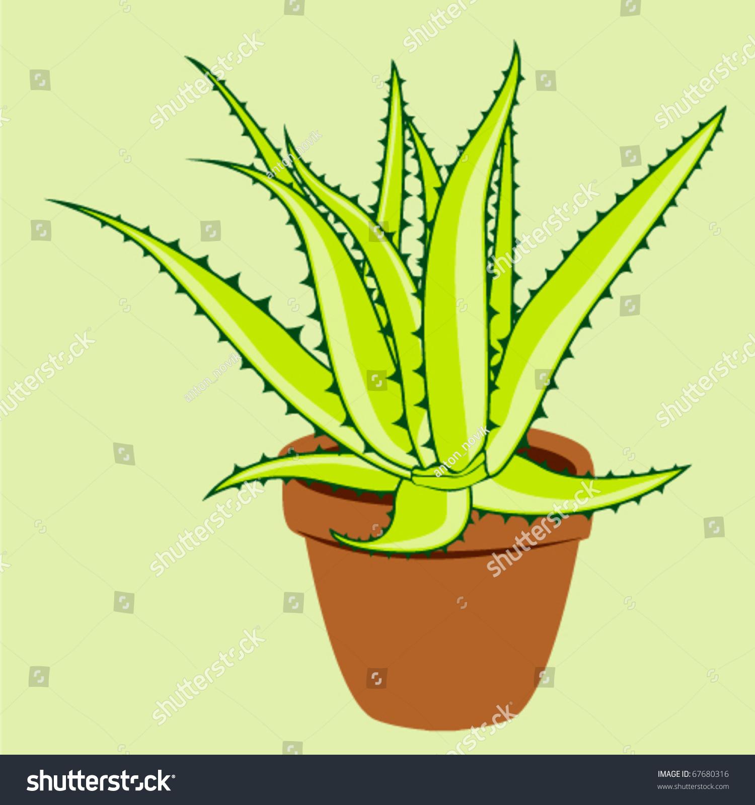 aloe vera plant pot vector image vectorielle de stock (libre de