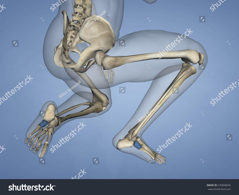 Cuboid Bone 3 D Model Stock Illustration 676808656 - Shutterstock