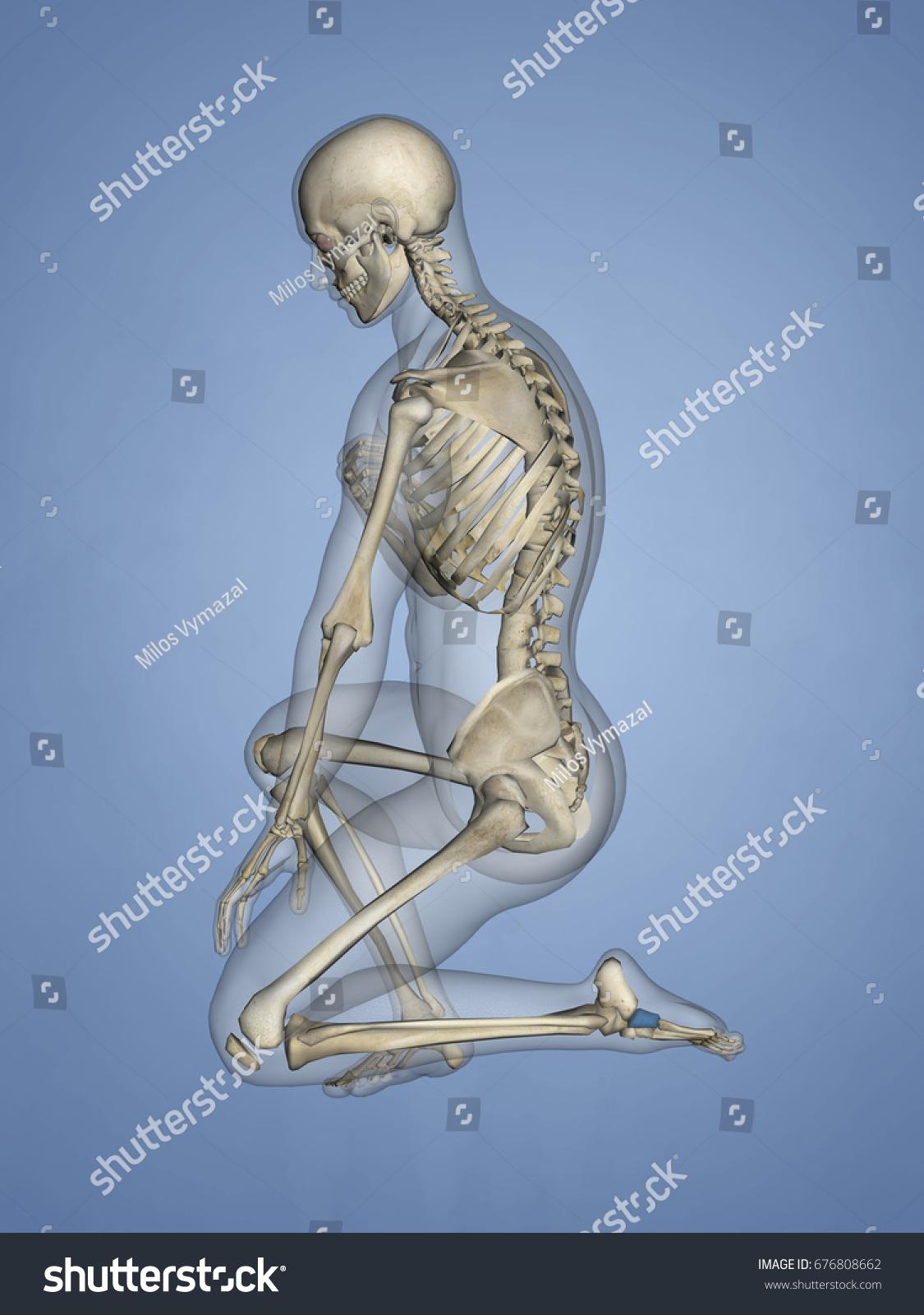 Cuboid Bone 3 D Model Stock Illustration 676808662 - Shutterstock